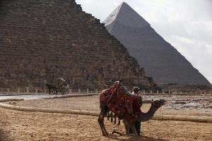 A camel, called the F-150 of the desert, was not used to move pyramid stones.