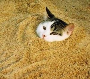 Unfortunate kitty is trapped with tons of nuclear waste and litter.
